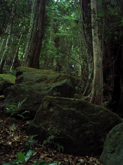 Ayanomori00